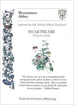 Westminster Abbey Heartsease Viola Seeds