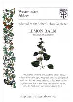 Westminster Abbey Lemon Balm Seeds
