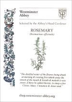 Westminster Abbey Rosemary Seeds