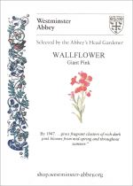 Westminster Abbey Wallflower Seeds