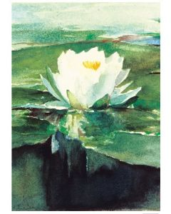 Waterlily Condolence Card