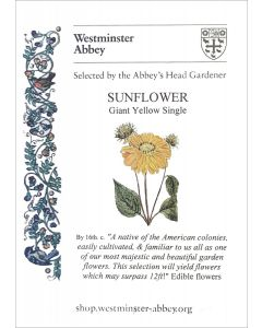 Westminster Abbey Sunflower Seeds