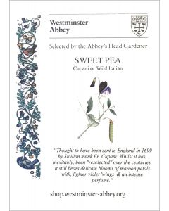 Westminster Abbey Sweet Pea Seeds